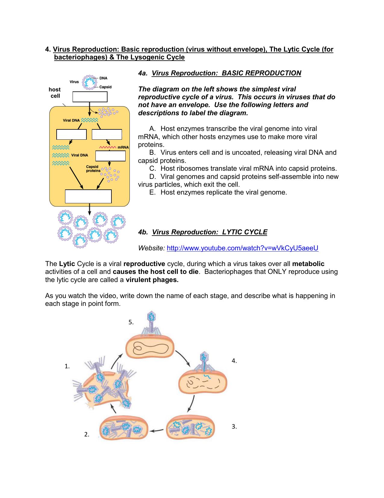 Wiring And Diagram Diagram Of Virus Reproduction