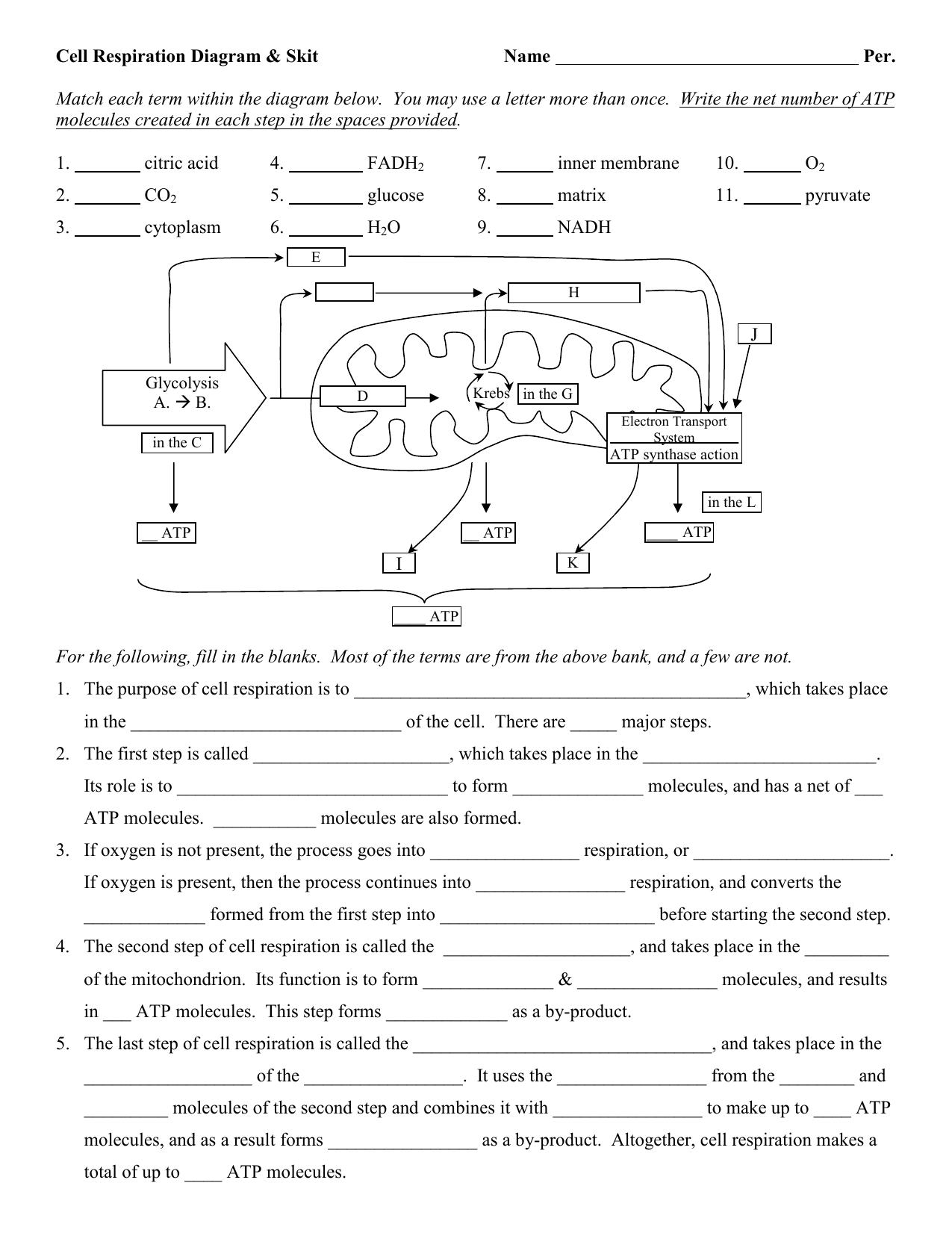 Photosynthesis And Cellular Respiration Diagram Worksheet