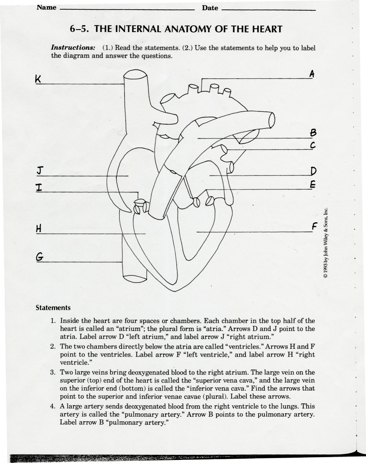 34 Label The Internal Anatomy Of The Heart