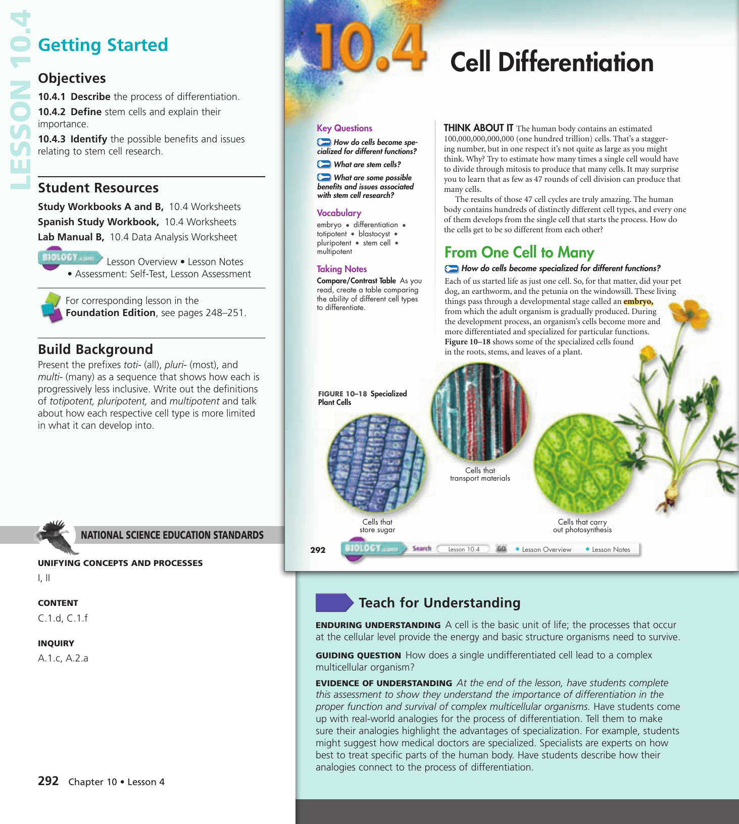 104 Cell Differentiation Worksheet Answer Key