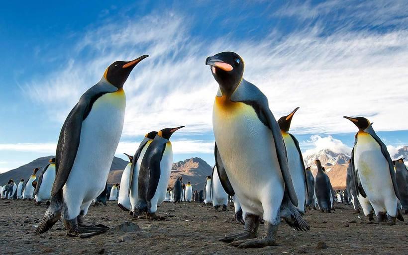 Пингвин не птица
