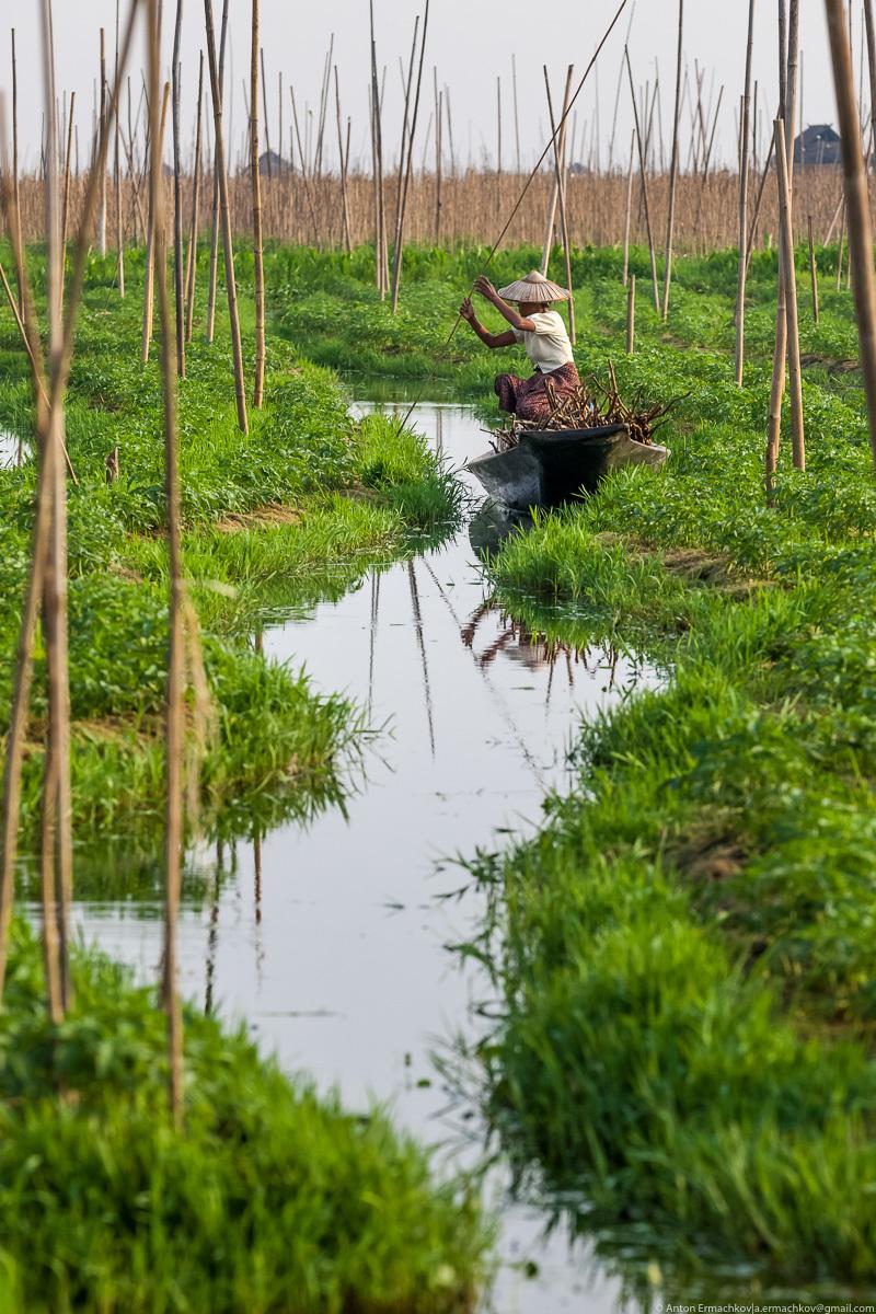 Колоритное озеро Инле, где грядки с помидорами расположены прямо в воде