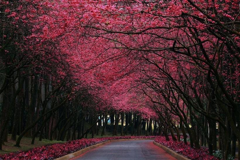12 снимков, о фантастической красоте деревьев