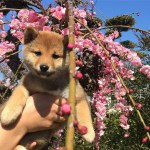Japan Aesthetic Puppy And Photography Image 7142184 On Favim Com