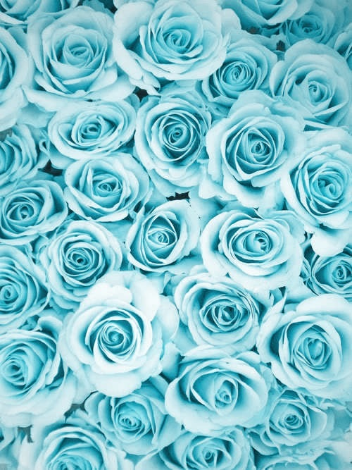 Aesthetic Baby Blue Blue And Color Image 4976858 On Favim Com