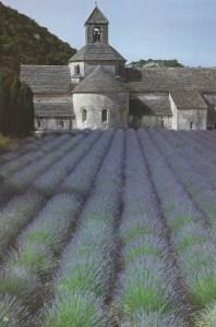 026 Abbaye lavande SCAN0161~1