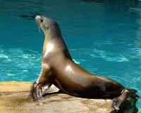 Aquários são compostos por várias espécies de animais marinhos (Foto: Mais Você / TV Globo)