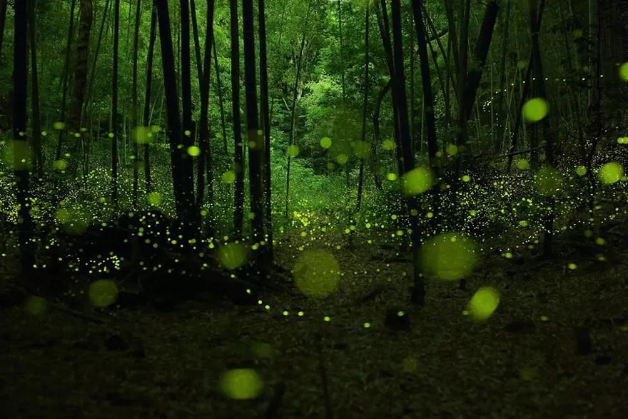 Fotógrafos e florestas (Foto: Yume Cyan / Divulgação)
