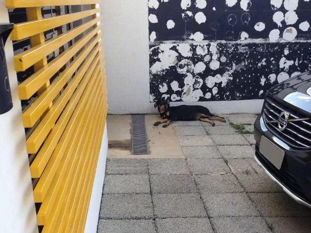 Cachorra possivelmente prenha se esconde de morador do lado de fora de agência (Foto: Arquivo Pessoal)