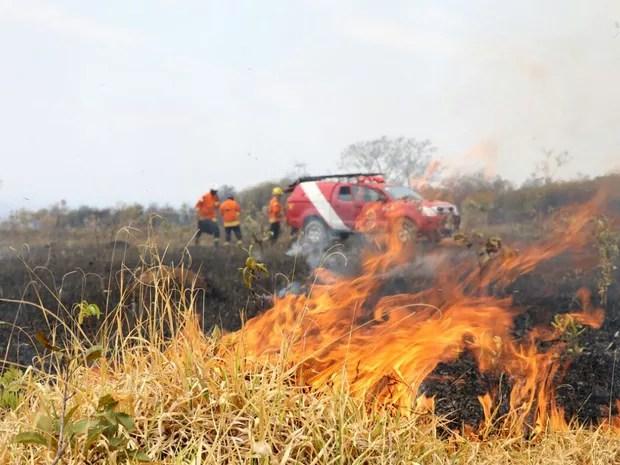Incêndio atingiu área de cerrado próximo às ruas 13 e 17 do Lago Oeste na manhã desta terça-feira (13) (Foto: Corpo de Bombeiros/Divulgação)