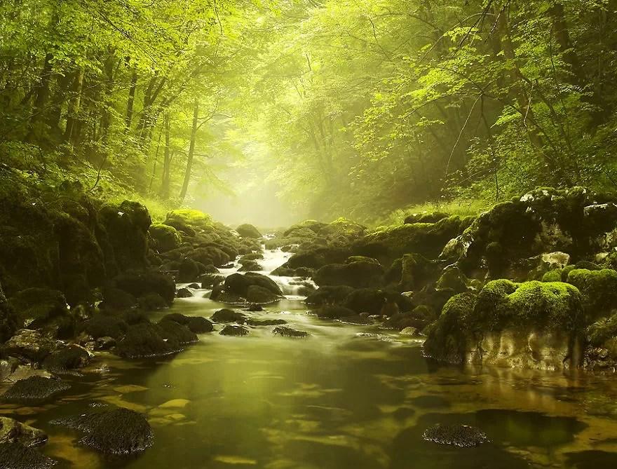 Fotógrafos e florestas (Foto: Vanja Vukadinović / Divulgação)