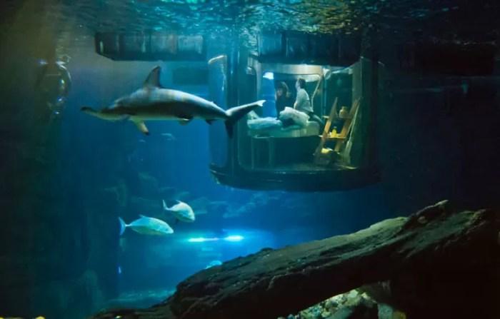 Hanah Simpson e Alastair Shipman passaram noite hospedado emquarto instalado no tanque dos tubarões (Foto: Michel Euler/AP)