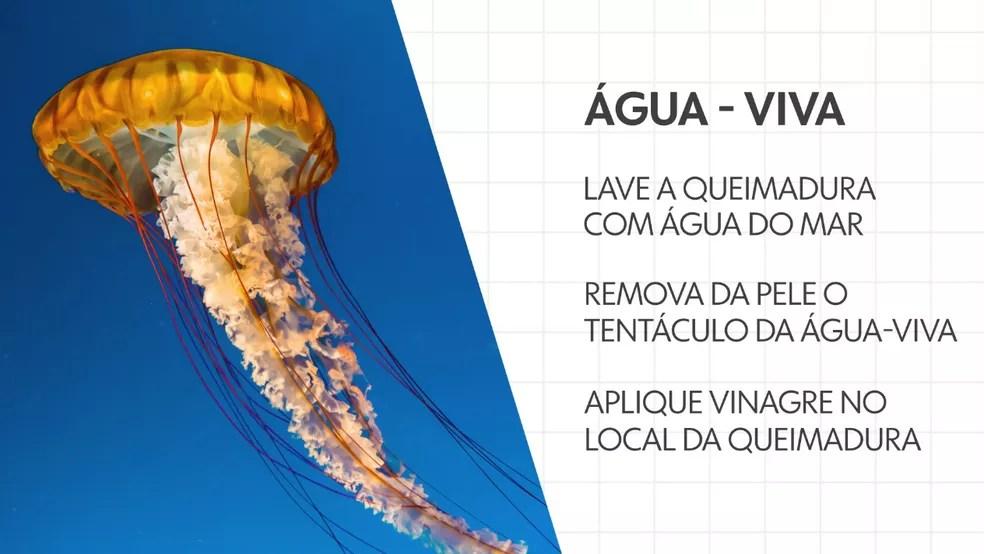 O que fazer se for 'queimado' pela água-viva — Foto: Arte/TV Globo