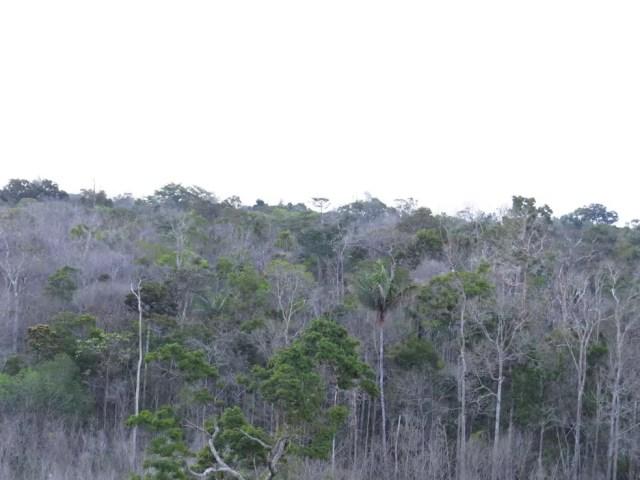 Parte da floresta amazônica no Brasil que está morrendo — Foto: Adriane Esquivel Muelbert, University of Leeds