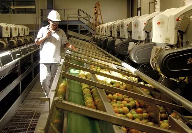 Funcionário supervisiona linha de produção de suco de laranja na Citrosuco (Foto: Divulgação)