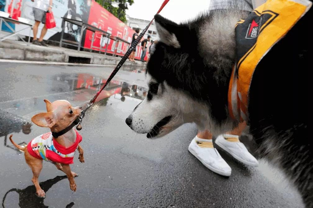 Cachorro grande 'encara' cãozinho antes de maratona canina na Tailândia (Foto: Jorge Silva/Reuters)