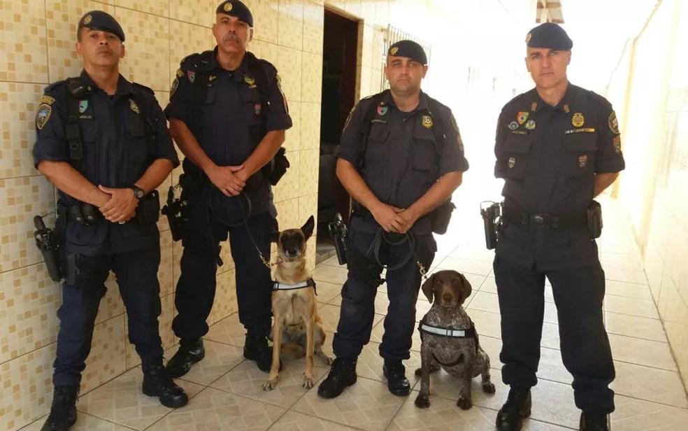 GCMs e cadelas que atuaram em busca por mulher cimentada na Zona Leste (Foto: Divulgação/ GCM)