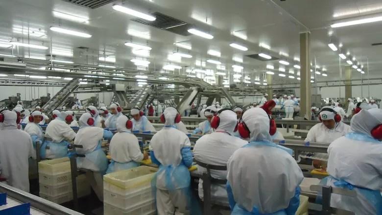 economia_gtfoods_producao (Foto: Divulgação)