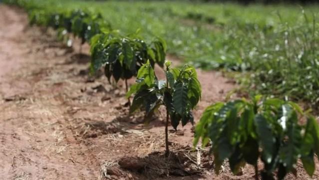 Enfermeiro diz que maior parte dos agricultores que entrevistou usam agrotóxicos sem prescrição agronômica — Foto: Reuters