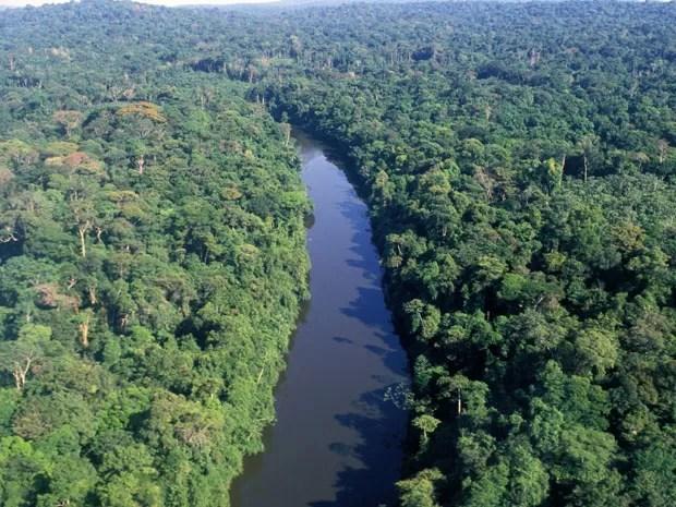Vista aérea da floresta amazônica  (Foto: AFP)