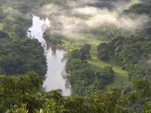 Rios serpenteiam as florestas no Acre (Foto: Reprodução/EPTV)