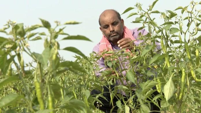 Vijendra Tadvi diz que o governo deveria investir em infraestrutura para a agricultura, não em estátuas — Foto: BBC