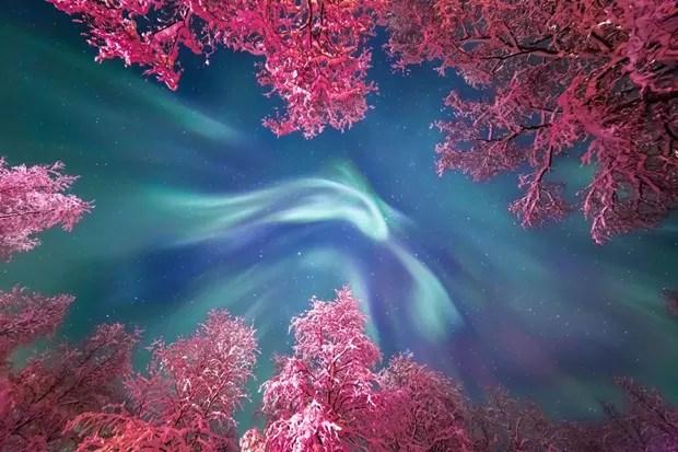 Aurora Boreal brilha sobre árvores com neve, iluminadas pelos postes da rua (Foto: Yulia Zhulikova/Reprodução)