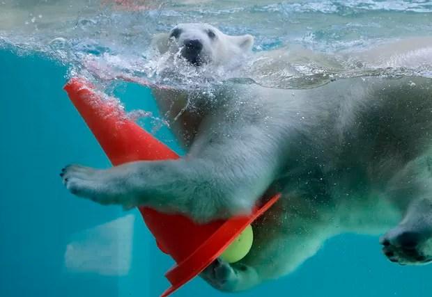 'Anori' foi fotografado se refrescando em uma de suas piscinas em Wuppertal, na Alemanha (Foto: Frank Augstein/AP)