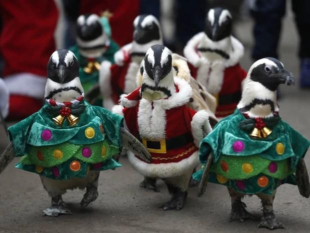 Pinguins vestidos como papais noéis e árvores de Natal 'desfilam' entre visitantes durante evento promocional em um parque temático de Yongin, no sul de Seul, Coreia do Sul. (Foto: Kim Hong-ji/Reuters)