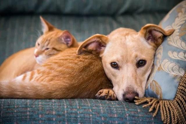 Saiba quais são os cuidados para viajar de carro com o seu pet (Foto: Getty Images)