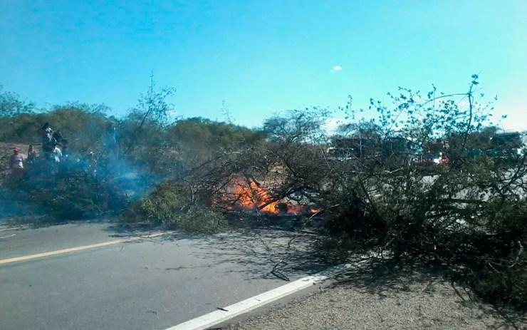 No protesto em Casa Nova, grupo quemou ganlhos de árvores na pista para bloquear passagem  (Foto: Divulgação/Polícia Militar)