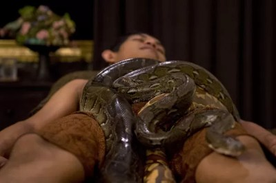 As cobras 'passeiam' pelo corpo dos clientes durante o tratamento. Duas massagistas acompanham para garantir a segurança (Foto: Romeo Gacad/AFP)