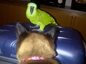 O papagaio Bob em cima de uma mala de viagem (Foto: Arquivo pessoal)