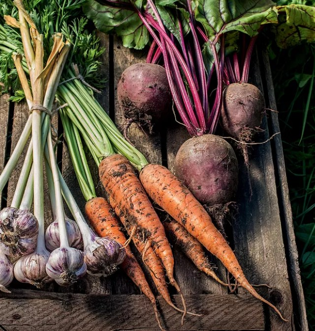 Healthy Organic Vegetables on a Wooden Background. Organic fresh harvested vegetables (Foto: Getty Images/iStockphoto)