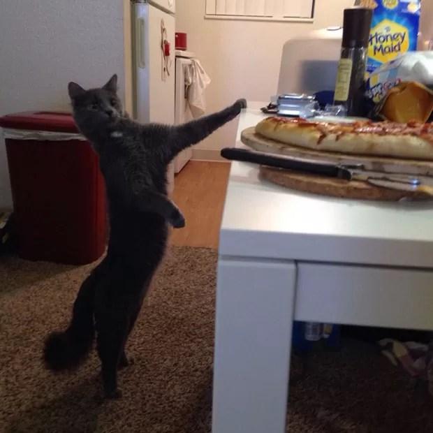 Gato é fotografado em 'pose hilária' ao ser visto de olho em pedaço de pizza (Foto: Reprodução/Reddit/KandT15)