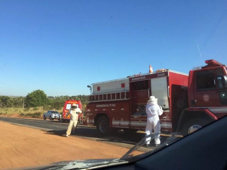 Acidente com caminhão carregado com abelhas (Foto: Acidente caminhão carregado com abelhas)