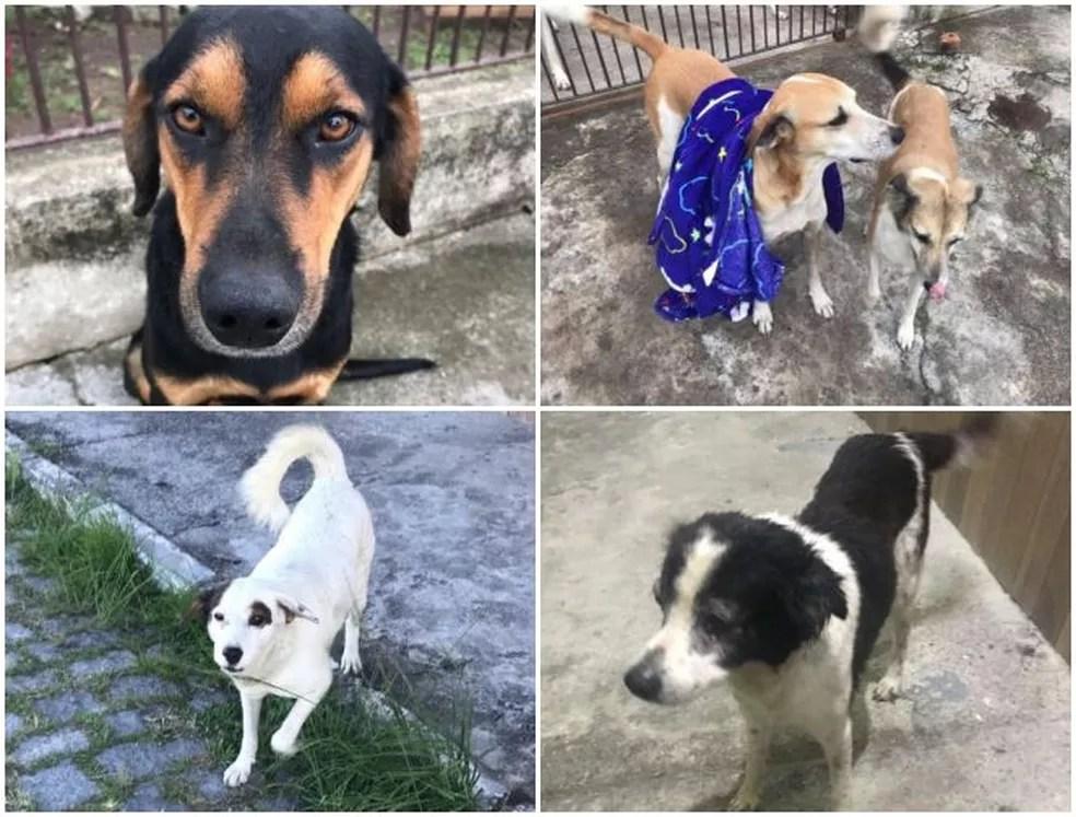 Neguinho, Pingo, Lili, Pirata e Belinha já são moradores do 'cãodomínio' — Foto: Nil Laino/Arquivo pessoal
