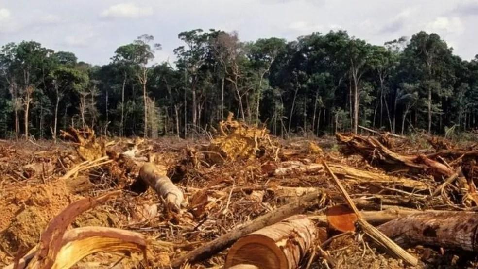 Desmatamento na Amazônia atingiu em 2020 o maior índice dos últimos 12 anos — Foto: Getty Images via BBC