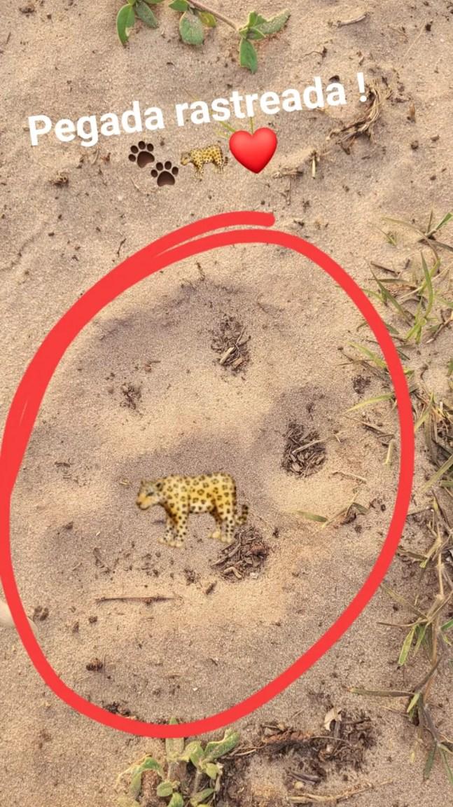 Guia turístico mostra pegada da onça em fazenda no Pantanal — Foto: Redes Sociais/Reprodução