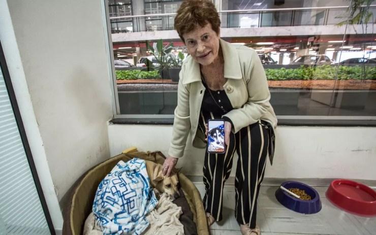 """Victorina Thereza Frugoli, conhecida na Alesp como """"mãe"""" dos animais de estimação da Casa (Foto: Fabio Tito/G1)"""