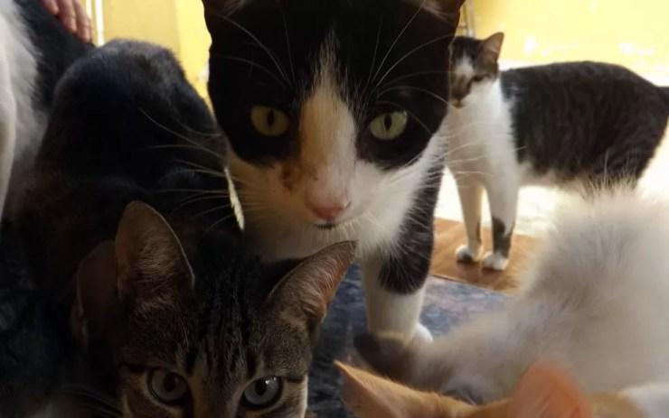 Gatos ajudaram mulher de Itapetininga a superar depressão (Foto: Caio Gomes Silveira/ G1)
