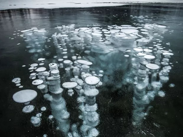 Bolhas de metano lançadas do permafrost ficaram congeladas quando tentavam alcançar a superfície do Lago Vermillion, no Parque Nacional Banff, no Canadá (Foto: Paul Zizka/Caters News)
