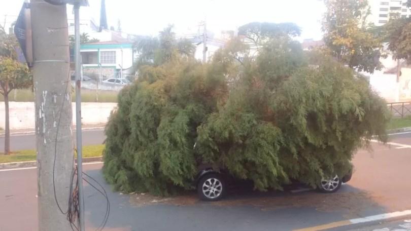 Em Sorocaba, uma árvore caiu em cima de um carro na Avenida Juscelino Kubitschek — Foto: Vinni Del Poço/Arquivo pessoal