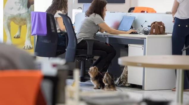 Cachorros em escritório — Foto: Marcelo Brandt/G1