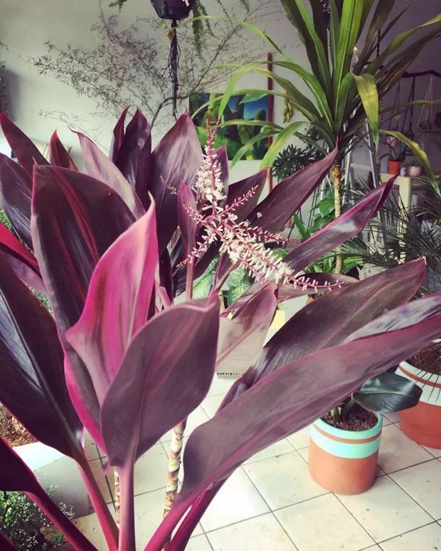 Seis plantas ultra violet, a cor de 2018 (Foto: Divulgação)