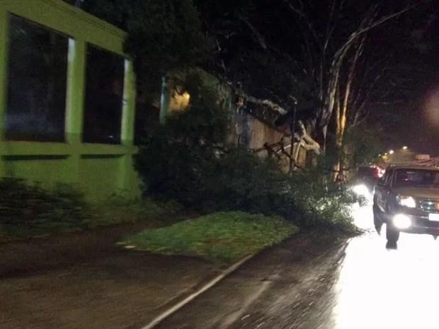 Árvore caída em calçada da Avenida Morumbi (Foto: Clara Velasco/G1)