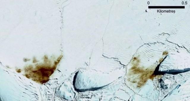 A colônia de Dawson-Lambton cresceu, segundo análise de imagens de satélite de 2018 — Foto: DIGITALGLOBE, A MAXAR COMPANY