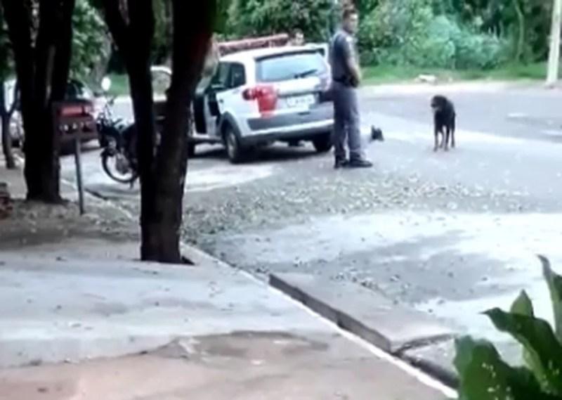 Policial foi atender ocorrência de cão avançando nas pessoas — Foto: Arquivo Pessoal