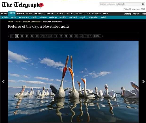 """Dupla de pelicano """"cantores"""" foi fotografada em uma região do Norte da Grécia. (Foto: Reprodução/Telegraph)"""