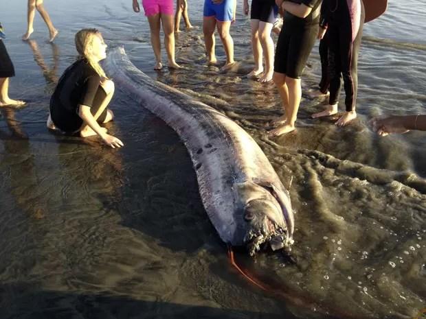 Peixe-remo de 4,27 metros foi encontrado em praia perto de Oceanside (Foto: Mark Bussey/AP)